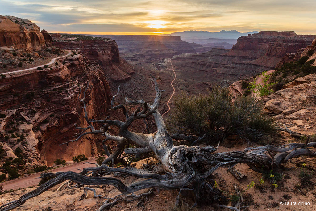 """Today's Photo Of The Day is """"Reaching for the Sun"""" by  Laura Zirino. Location: Canyonlands National Park, Utah."""
