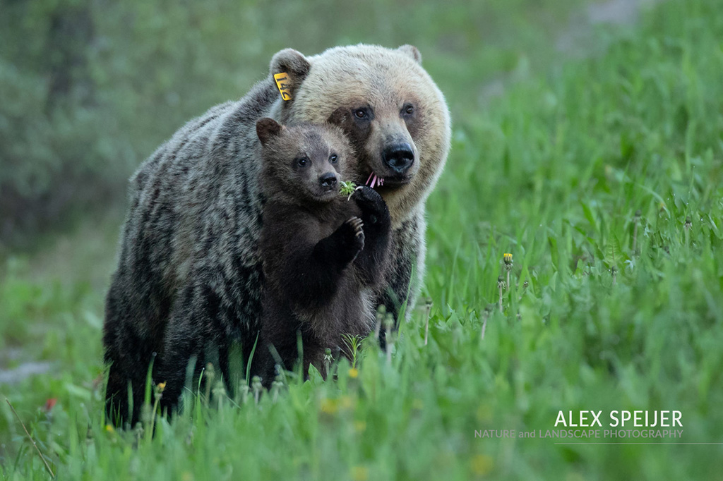 """Today's Photo Of The Day is """"Family Portrait"""" by Alex Speijer. Location: Banff National Park, Alberta."""