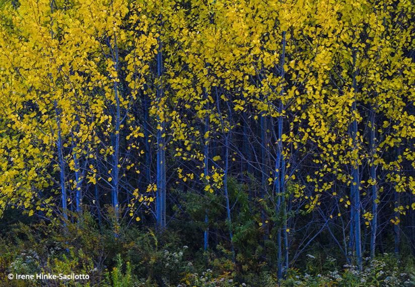 Fall color in West Virginia: Canaan Valley