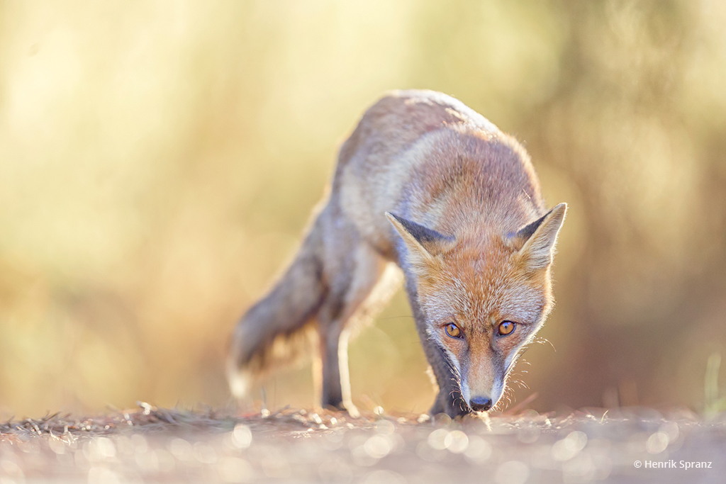 """Today's Photo Of The Day is """"Stalking"""" by Henrik Spranz."""